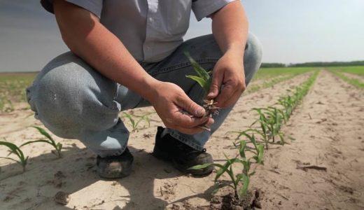 土壌から排出される亜酸化窒素とは? Pivot Bio