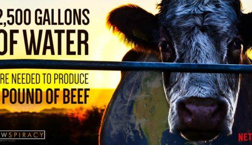 環境問題のタブーとは?畜産業会の闇に迫るドキュメンタリー NETFLIX「Cowspiracy:サステイナビリティ(持続可能性)の秘密」